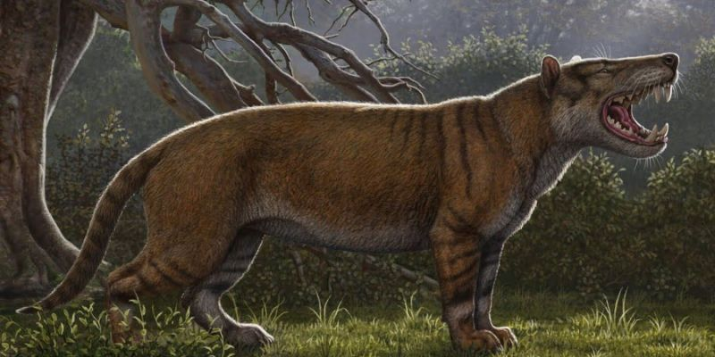 This Gigantic Prehistoric Cat Weighed as Much as Seven Lions