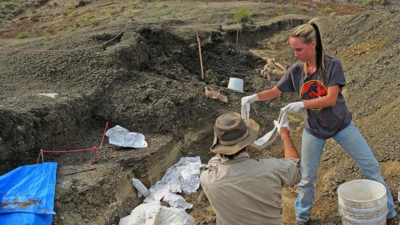 Discovery of fossilized fish may shed light on the day an asteroid hit earth, killing the dinosaurs